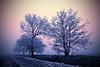 Galaverna (frozen, iced fog) #9 (antony5112) Tags: italy ice nature fog italia natura nebbia ghiaccio wow1 wow2 wow3 wow4 galaverna wow5 wowhalloffame