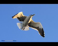 Seagull ( [ Libya Photographer ]) Tags: canon seagull sigma os 7d mm ahmed dg  benghazi  70300        f456        fakroun
