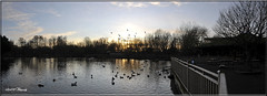 PANORAMA SUNSET (Shaun's Nature and Wildlife Images....) Tags: sunsets shaund