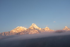 DSCF1722 (shanghaiflamingo) Tags: nepal sunrise pokhara fishtail