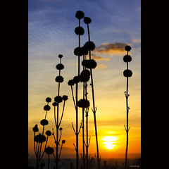 Beautiful sunset (-clicking-) Tags: lighting light sunset sky sun sunlight hot nature beautiful sunshine silhouette skyscape landscape natural cloudy vietnam fade fading honghn phanthit 100commentgroup magicalskies vietnameselandscape bestcapturesaoi elitegalleryaoi