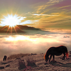 Amanecer helado en Saibi (Jabi Artaraz) Tags: light naturaleza mist luz sol nature beautiful animal fog fauna sunrise painting amazing fantastic spain europa europe gorgeous sony natur natura amanecer invierno zb lovely fro bizkaia niebla helado euskalherria euskadi vizcaya basquecountry spanien baskenland 1000views saibi paysbasque biskaia yegua bruma animaliak argia urkiola eguzkia beautifulearth pottoka negua 3000views supershot 100faves hotza 200faves 1000vistas biskaya euskoflickr fineartphotos fantasticnature abigfave behelainoa superaplus aplusphoto flickrbest impressedbeauy diamondclassphotographer flickrdiamond excapture jartaraz alfa350 3000vistas mygearandme bestofblinkwinners blinksuperstars