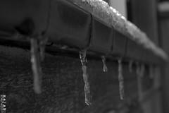 Frozen Drop (N0@h) Tags: noah blackandwhite bw snow cold haarlem water blackwhite waterdrop thenetherlands drop freeze 2012 blackwhitephotos canoneos50d worldbest anawesomeshot n0h diamondclassphotographer flickrdiamond noahsphotos ©n0a© ©noah© ©noha© ©n0h© n0hphotos noahphotos