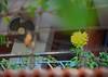 "Varanda (HamimCHOWDHURY  [Read my profile before you fol) Tags: life pink blue red portrait white black green nature yellow canon eos colorful purple faces sony gray magenta violet surreal ash dhaka dslr vaio rgb bangladesh varanda 60d 595036 dhaliya ""framebangladesh"" ""incrediblebengal"" gettyimagesbangladeshq12012"