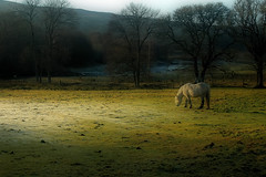Archie (James L71 (Not For Profit)) Tags: winter horses horse scotland highlands frost lairg