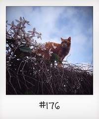 "#DailyPolaroid of 23-3-14 #176 • <a style=""font-size:0.8em;"" href=""http://www.flickr.com/photos/47939785@N05/13741754053/"" target=""_blank"">View on Flickr</a>"