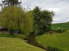 River Brett, Lavenham (Tammy Jackson) Tags: suffolk spring willow chestnut lavenham riverbrett