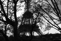 (Franxicaine) Tags: paris france tree tower monocromo europa europe torre arboles tour eiffel arbres toureiffel francia sombras
