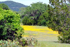 DSC_2873e ~ Scenes From The Hill Country (BDC Photography) Tags: usa nikon texas wildflowers d3 texaswildflowers texashillcountry pipecreek banderacounty nikond3 nikondslrcamera latigoranch nikonafnikkor180mmf28difedlens bw72ekr1511xfilter naturebynikon