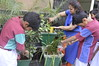 "Seniors Jivakul Club - Gardening (1) • <a style=""font-size:0.8em;"" href=""http://www.flickr.com/photos/99996830@N03/26792212726/"" target=""_blank"">View on Flickr</a>"