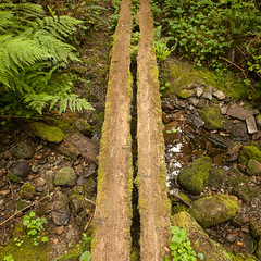 WCT - Day 2 - Dual Planks (yeahwotever) Tags: 2016 british canada columbia bamfield carmanah coast dominion forest hike island life national pacific park path portrenfrew rim saving