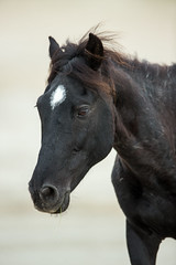 Portrait of a Stallion` (brentb2012) Tags: corolla wildhorses stallion obx