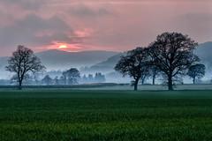 Red Sky, Green Grass. (JSP92) Tags: trees red sun mist tree green field grass landscape scotland unitedkingdom gb layers strathmiglo