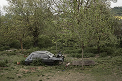 205 (Andy Stafford) Tags: france car garden wreck peugeot 205