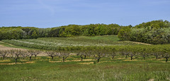Orchard (Janet's View2012) Tags: trees ferry fruit rural orchard ferrymichigan