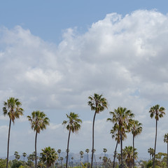 Hotel Balcony View (de3euk) Tags: california sky clouds palms hotel us view unitedstates balcony marinadelrey hiltongardeninn lrcc canoneos6d canonef100mmf28lmacroisusm