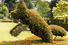 Leaping Topiary (Knightshayes Court garden) (Keith in Exeter) Tags: uk england sculpture plant grass court garden landscape bush topiary europe outdoor lawn devon hedge gb yew nationaltrust leaping tiverton knghtshayes