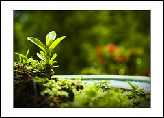 new life #3 (e.nhan) Tags: life new light black green art nature leaves closeup leaf colorful colours shadows dof bokeh backlighting enhan