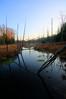 Swamp (Notkalvin) Tags: dublin michigan swamp wilderness baldeagles wellston slamon mikekline michaelkline notkalvin notkalvinphotography