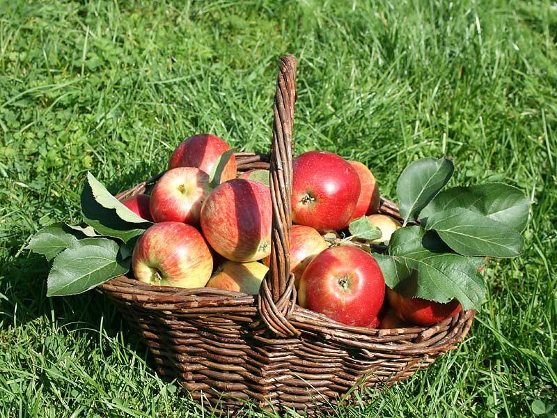 Kirschblütenhof - Apfelkorb
