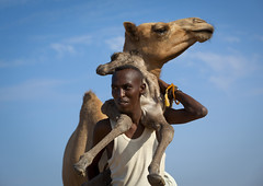 Somali nomad carrying camel new born  - Somaliland (Eric Lafforgue) Tags: africa baby color animal square mammal outdoors photo exterior desert little camel photograph newborn afrika nomad somali 6600 livestock somalia carrying somaliland afrique hornofafrica nomadic onemanonly somalie africanethnicity britishsomaliland zeila somali saylac  ceylac  szomlia   blackethnicity soomaaliland