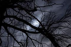 Contraluz de luna (Mon Labiaga Ferrer) Tags: luz azul contraluz noche luna cielo rbol nocturna monte boadilla largaexposicin nubles boadilladelmonte