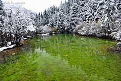 Green in White (nawapa) Tags: china travel mountain snow pool forest landscape pond view place scenic songpan sichuan huanglong 2011 nawapa