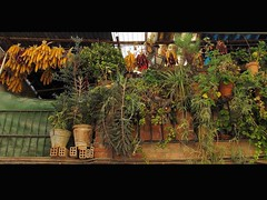 ¿La galeria o la alacena? (Micheo) Tags: smile corn exhibition pantry sonrisa maize maiz exposicion palomitas despensa alacena micheo rosetas panochas cosassencillas