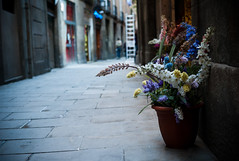 flowers (KhalzevDima) Tags: barcelona street leica flowers spain summicron m8 40 f2 40mm 20 leitz leicam8