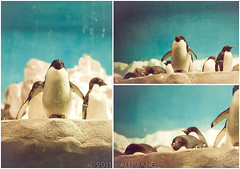 penguins! (Alli Jiang) Tags: life sea cute bird animal photography penguin aquarium marine sandiego sealife seaworld creature marinelife 2011 allijiang