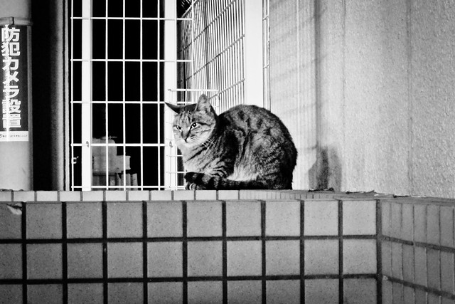 Today's Cat@2011-12-20