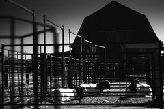 Farm & Ranch Heritage Museum (glasshalffull91) Tags: los cruces new mexico goat desert mountain vista sirra black and white bw light shadow farm ranch heritage museum centenial nd4 nutral density 4 cpl polorizer polorizing filter canon eos 500d t1i nikon nikkor 50mm f18e f18 18 5018 1850 series e animal livestock windmill
