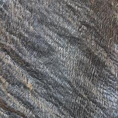 Rock366 : Day 6 : Crenulated Schist (Hypocentre) Tags: schist rock366