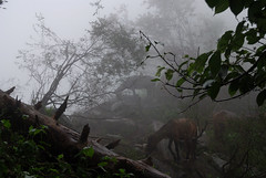 Hampta Trek (Vivek Sheel) Tags: camping india trekking himalaya manali rohtangpass himachalpradesh hampta