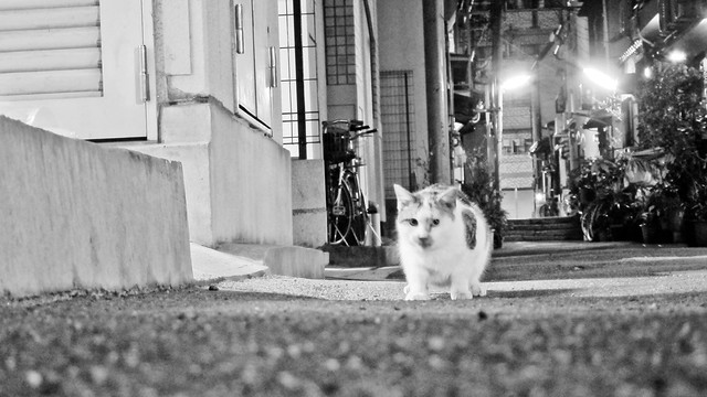 Today's Cat@2012-01-10