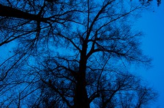 Aspen at Dusk (Ben Moscona | Photography) Tags: blue trees sky usa cold tree night contrast cool nikon colorado dusk branches chilly aspen d7000