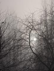 (ela_s) Tags: morning trees winter sun bird nature fog canon december kraków zima s90 poranek słońce grudzien ptak mgła drzewa notprocessed
