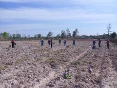 Planting on 12 Rai (Asia Plantation Capital) Tags: thailand north na east ban jaa nakon sakon