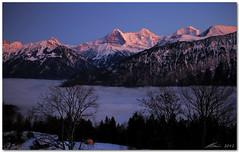 over the clouds (chris frick) Tags: sunset snow mountains clouds switzerland dusk january alpen eiger 2012 alpenglow jungfrau swissalps schreckhorn nebelmeer moench alpengluehen ef2470mm chrisfrick eos5dmark2