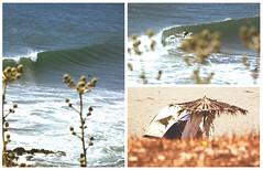 del orgen (AngelesreyeS) Tags: chile cactus sexta surf waves foto playa jo surfing punta lobos region olas reyes morros diamante pichilemu infiernillo puntilla cahuil angelesreyes joreyes joreyesfoto