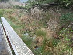 Marsh (A.C. Hobbs) Tags: oregon bridges oregoncoast yachats lincolncounty oregoncoasttrail