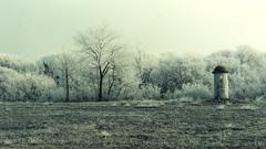 The sentinel (in 16:9) (fred:vr) Tags: trees winter abandoned alberi military fred inverno sentinel militare sentinella