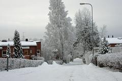 DSC04147_8_9IntensiveA (SeppoU) Tags: winter snow suomi finland helsinki minolta sony lumi talvi nex3 copyleftby seppouusitupa