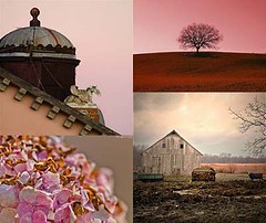 Friday Flickr Photo Collage [pink & Brown] (LethaColleen) Tags: pink red brown tree rooftop architecture barn burgundy horizon gray hydrangeas colorboard warmgray photocollage flickrphotocollage flickrcollage photomosaic inspirationcollage moodboard moodcollage photographycollection flickrmosaic colorstory colornarrative photostory photonarrative colorinspiration