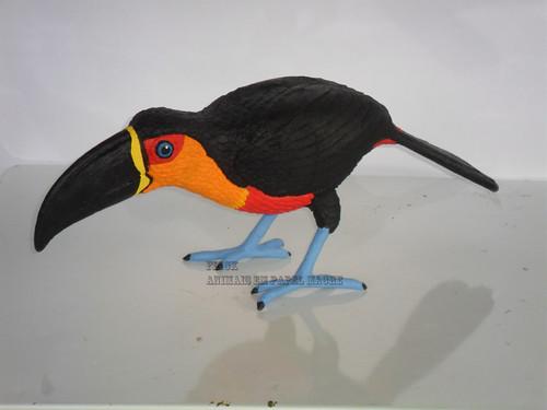 R. vitellinus ariel (1)