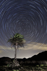Calblanque Stars (raul_lg) Tags: sky lightpainting canon stars lights north murcia cielo estrellas nocturna lantern fullframe cartagena palmera norte startrails linterna largaexposicion calblanque circumpolar intervalometro maglite3d raullg