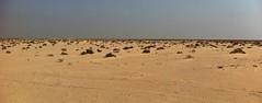 Desert, Basrah, Iraq