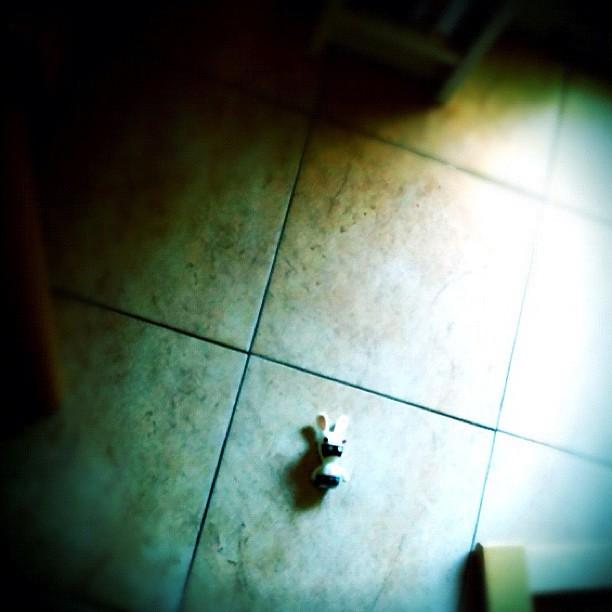 La vittima del terremoto di oggi #terremoto #igersitalia #milano #ravingrabbit #rabbit