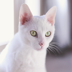 Cat eyes (Danielle Pearce) Tags: white green eye cat eyes kitten kitty stare staring