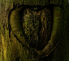 Tree love (lovestruck.) Tags: uk summer england tree love countryside heart shropshireunioncanal narrowboats 2011 challengeyouwinner staffsworcscanal